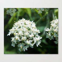 Pushki Blossom Photography Print Canvas Print