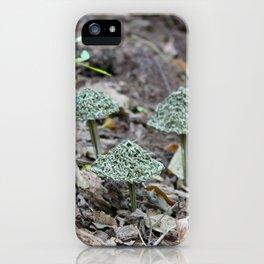 Pinus Taeda - Loblolly Pine iPhone Case