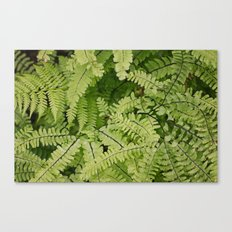 ferns. Canvas Print