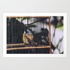 Bird, Bali Art Print