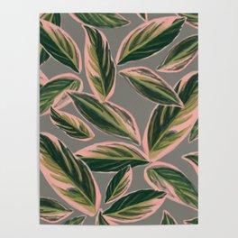 Calathea Leaves Pattern- Pink Green Gray Poster