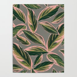 Calathea Leaves Pattern- Pink Green Gray Poster