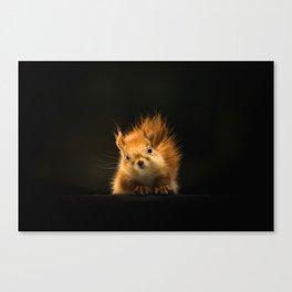 Starring Squirrel Canvas Print