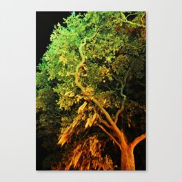 The Secret Haven of Tisiphone Canvas Print