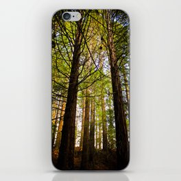 Within The Redwoods iPhone Skin