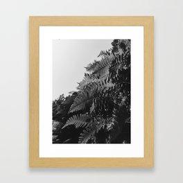 Colorless Ferns Framed Art Print