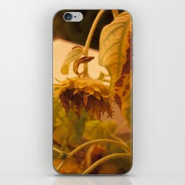The Sun has Set and tomorrow, God willing, it will rise again [SUNFLOWER] [WILTING] [YELLOW SKY]  iPhone Skin