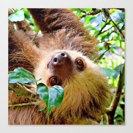 Awesome Sloth Canvas Print