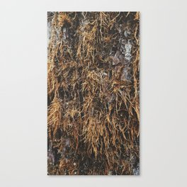 covered in moss Canvas Print