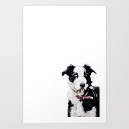 Collie Dog Art Print