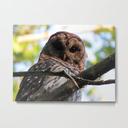 """Hoo"" are you looking at? Metal Print"