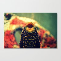 kirby Canvas Prints featuring Kirby by Raspberry Diamonds Photography