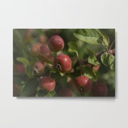 Red drupes Metal Print