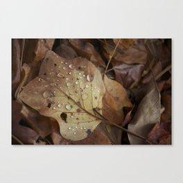 Autumn Droplet Canvas Print