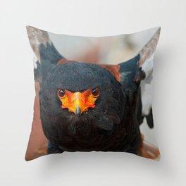 Bateleur Eagle (Terathopius ecaudatus)  Throw Pillow