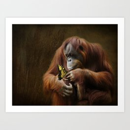 Orangutan and Butterfly Art Print
