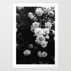 Tumbling Roses Art Print