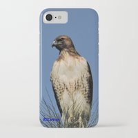 snatch iPhone & iPod Cases featuring Red-Tailed Hawk on Watch at Foothill and B Street by Ralph S. Carlson