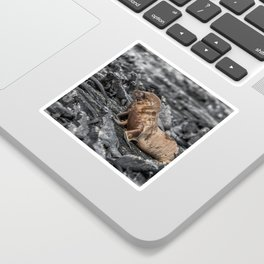 Baby sea lions surrounded by marine iguanas Galapagos Sticker