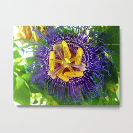 Passion Of The Flower Metal Print