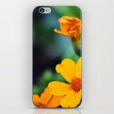 orange & turquoise iPhone & iPod Skin