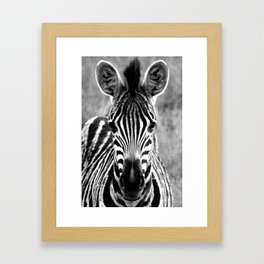 Zebra Portrait; Black and White Nature Photography from Africa Framed Art Print