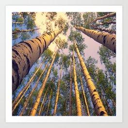 Aspen Trees Against Sky Art Print