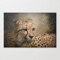 cheetah Canvas Prints featuring Cheetah  by Pauline Fowler ( Polly470 )