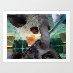 Snapping turtle's world Art Print