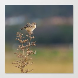 The little bird Canvas Print