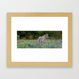 Wild Coyote Framed Art Print