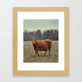 cow lick Framed Art Print