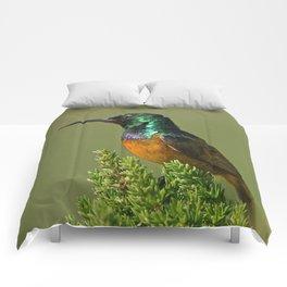 Orange Breasted Honey Bird Comforters