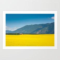 Canola farm Art Print