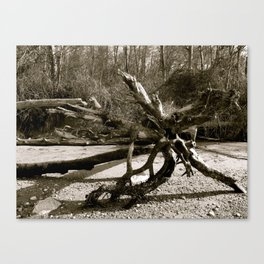 Driftwood on the Beach Canvas Print