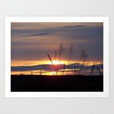 Sunset through the weeds Art Print