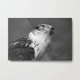 Red-tailed Hawk I B&W Metal Print