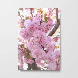 Pink Blossoms Beauty Metal Print