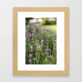 Lavender Fields Forever Framed Art Print