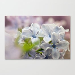Macro shot of lilac flower Canvas Print
