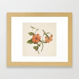M. de Gijselaar - Yellow Chinese rose (1820) Framed Art Print