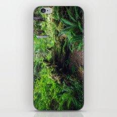 Hoh Rain Forest iPhone & iPod Skin