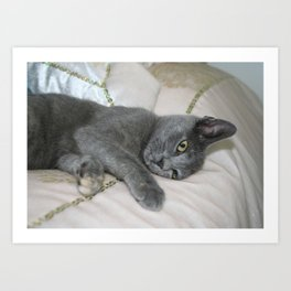 Grey Kitten Relaxed On A Bed  Art Print