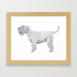 Soft coated wheaten terrier Framed Art Print