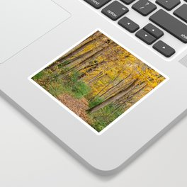 Autumn Forest // Ohio Sticker