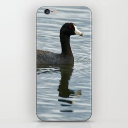 American Coot Reflecting on the Water - Photography iPhone Skin