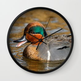 Talkative Green-Winged Teal at the Pond Wall Clock