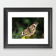 Common Buckeye Framed Art Print