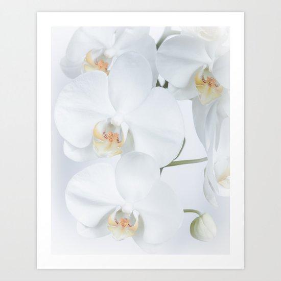 White orchids flowers pure white romantic Art Print