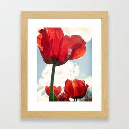 Flower Photography, Deep Ruby Red Art Print, Autumn, Home Decor Nursery Decor  Nature 8x10 Framed Art Print
